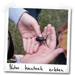 Sägebock-Käfer in Kinderhand
