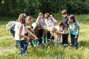Kinder bei der Pflanzenbestimmung auf der Wiese.