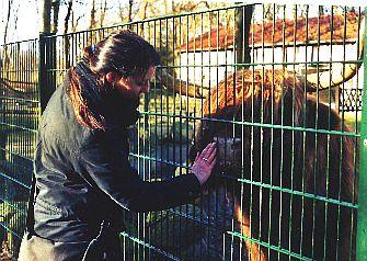 Highland-Rind im Tierpark Angermünde